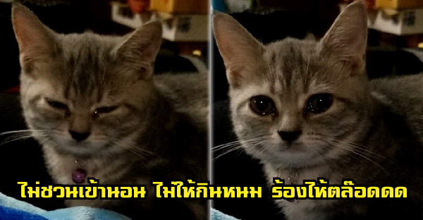"""""""ขุนหลวง"""" น้องแมวขี้ไห้ ไม่ให้กินหนม ไม่ชวนเข้านอน บ่นนิดบ่นหน่อยบ่ได้ น้ำตาซึมตลอด"""