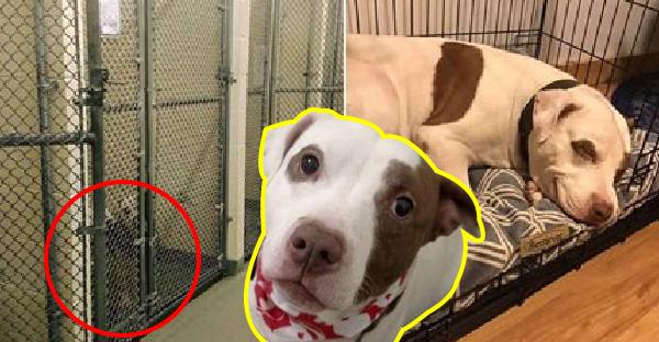 เจ้าหน้าที่เฮลั่น..เมื่อสุนัขตัวสุดท้ายในศูนย์พักพิงถูกรับเลี้ยงและน้องก็ยิ้มไม่หุบ