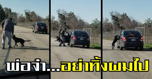 สุนัขผู้ซื่อสัตย์พยายามเกาะขาเจ้าของตามขึ้นรถ แต่กลับถูกทอดทิ้งหน้าตาเฉย