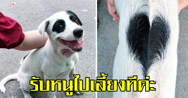 สาวโพสต์หาบ้านให้หมาจร ขอบตาแพนด้า หลังอานรูปหัวใจ ชาวเนตแห่เม้นแชร์กระจาย ได้บ้านไปตามระเบียบ