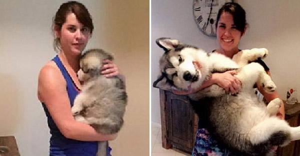 มัดรวมภาพการเติบโตของสุนัข ที่กาลเวลาช่วยเพิ่มความน่ารักยิ่งกว่าทวีคูณ