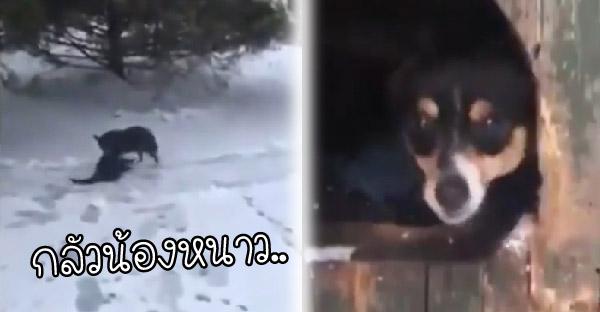เจ้าตูบกลัวน้องแมวเล่นหิมะหนาว จึงวิ่งไปคาบพาเข้าบ้านหมาซะงั้น