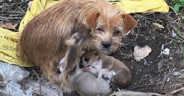 คนใจดีโยนขนมปังให้สุนัขจรจัดกิน ก่อนที่มันจะพาไปหาลูกๆ และส่งสายตาอ้อนวอนให้ช่วยพวกมันที