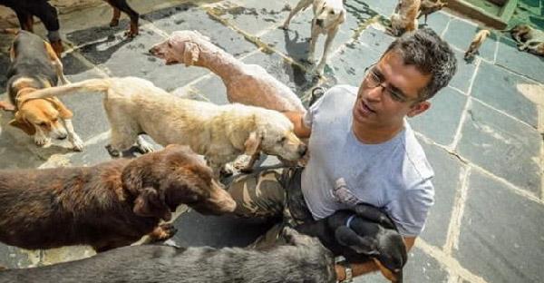 วิศวกรหนุ่มใช้เวลาหลังเลิกงาน เพื่อดูแลสุนัขจรจัดมากกว่า 700 ตัวในบ้านหลังสุดท้าย