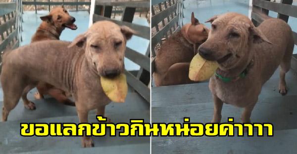 หมาน้อยสองแม่ลูกแสนรู้ คาบใบไม้พร้อมส่งยิ้มหวาน มาขอแลกข้าวกินทุกวัน