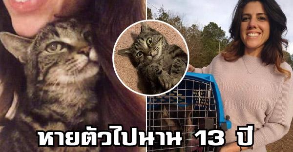 แมวลายสลิดหายตัวไปนาน 13 ปี ได้กลับมาเจอเจ้าของอีกครั้งราวกับปฏิหาริย์