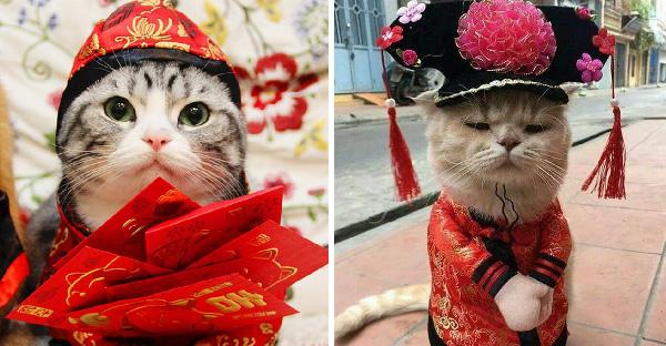 มัดรวมภาพแมวเหมียวในวันตรุษจีน ที่บรรดาทาสต่างจัดแฟชั่นชุดใหญ่มาให้เพียบ