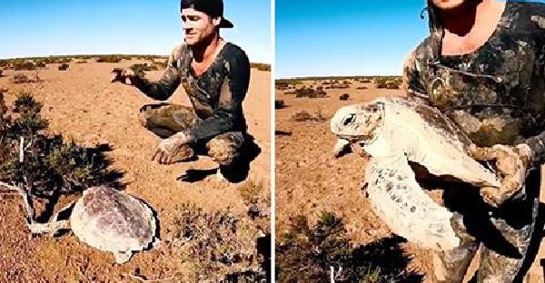 เต่าทะเลติดกับดักบนพื้นดินอันแห้งแล้ง ชายหนุ่มจึงช่วยพามันกลับสู่บ้านที่แท้จริงอีกครั้ง