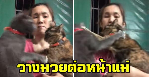 สาวตั้งใจอุ้มแมวถ่ายภาพน่ารักๆ แต่เจ้าเหมียวกลับวางมวยใส่กัน ไม่เกรงใจคุณแม่บ้างเลย