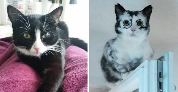 ลูกแมวสีขาวดำยิ่งโตสียิ่งเปลี่ยน แต่กลับสวยงามยิ่งกว่าเดิมเพราะโรคด่างขาว