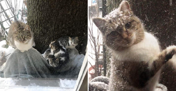 แม่แมวหอบลูกมาให้มนุษย์เลี้ยงและวิ่งหายไป ก่อนจะกลับมาอีกรอบเพราะถูกคนอื่นจับทำหมัน