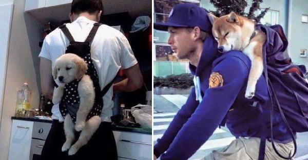 """มัดรวมภาพคนรักหมาที่แบก """"เพื่อนรัก"""" ขึ้นหลังผจญภัยไปด้วยกัน"""