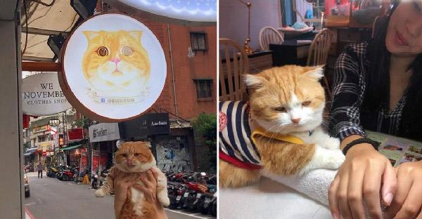 ร้านทำเล็บสำหรับทาสแมว เป็นทั้งพนักงานต้อนรับ โลโก้ร้าน และทุกอย่างให้เธอแล้ว