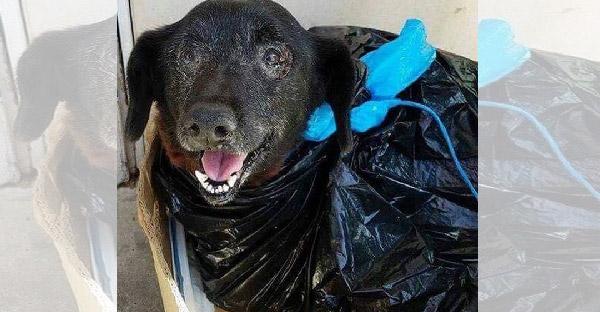 สุนัขแก่ถูกห่อด้วยถุงขยะโดนทิ้งไว้หน้าศูนย์พักพิงสัตว์ สาเหตุเพราะโรครุมเร้า