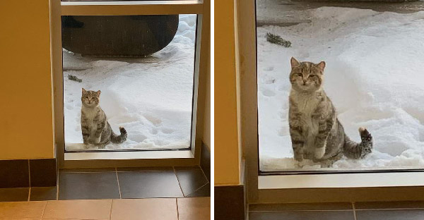 แมวจรจัดทนหนาวไม่ไหว จึงเดินมาเกาะกระจก กวักมือเรียกพี่ๆในสถานีดับเพลิง ช่วยพาเข้าไปข้างในหน่อย