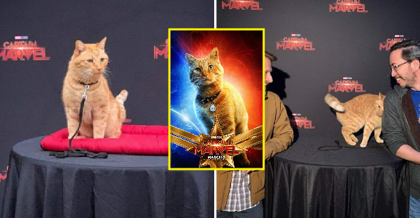 """ทำความรู้จักกับ """"Goose"""" แมวส้มจอมขโมยซีน ที่หนังยังไม่ฉายก็ดังเปรี้ยงจาก Captain Marvel"""