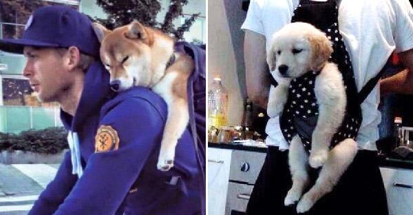 มัดรวมภาพคนรักหมาที่แบกเพื่อนรักขึ้นหลัง พร้อมออกไปผจญภัยด้วยกัน