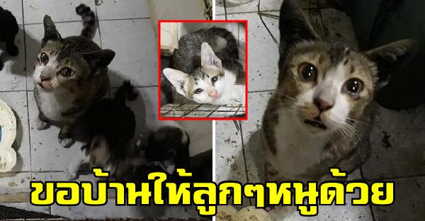 แม่แมวน้ำตาคลอเบ้า ขอบ้านให้ลูกๆได้อยู่พร้อมหน้ากันทั้งครอบครัว