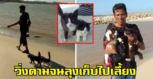 คุณลุงเจอสองลูกแมวจรจัดวิ่งตามริมหาด น่ารักขนาดนี้มีหรือที่คุณลุงจะปล่อยทิ้งไว้