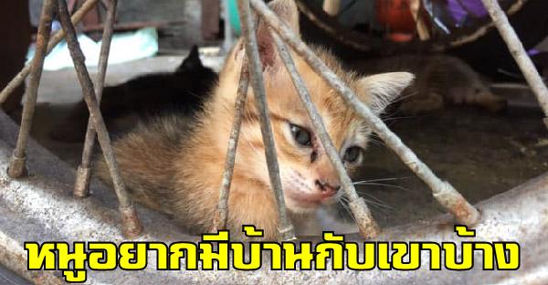ลูกแมวจรตลาดคลองเตยกับชีวิตข้างถนน อยากมีเจ้าของดูแล ไม่อยากอยู่ตรงนี้แล้ว