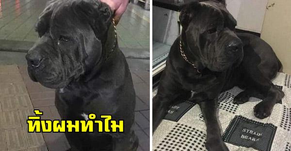 สุนัขตัวโตนั่งน้ำตาซึม หลังถูกเจ้าของทิ้งไว้ข้างถนน ก่อนชายใจกล้าจะช่วยพาส่งโรงพยาบาลสัตว์
