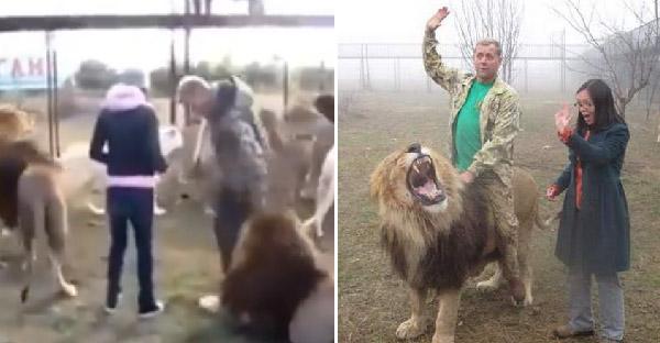 สวนสัตว์ไครเมียคิดว่าเป็นเรื่องดี ที่เปิดโอกาสให้นักท่องเที่ยว เข้าไปเดินเล่นกับสิงโตได้