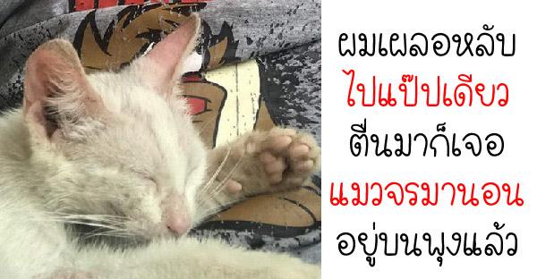 หนุ่มเผลอหลับวูบเดียว ตื่นมาอีกทีเจอแมวจรมานอนบนพุง จึงกลายเป็นทาสแมวแบบไม่รู้ตัว