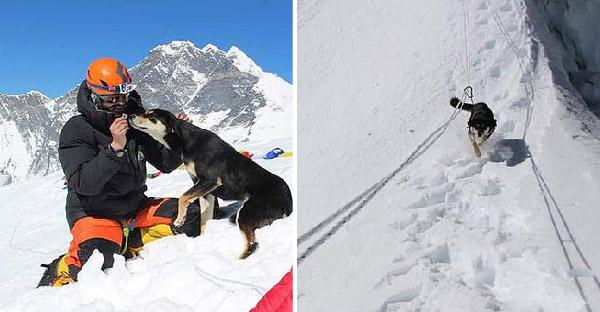 ตูบปริศนาร่วมพิชิตเทือกเขาหิมาลัยสูงกว่า 23,000 ฟุต พร้อมนักปีนเขาร่วมเป็นพยาน