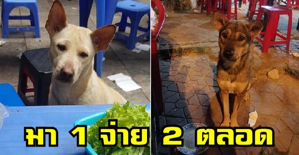 ชาวเนตเผยภาพหมาจรจัด ทำหน้าตาอ้อนวอนขอกินอาหาร ที่ใครเห็นเป็นต้องใจอ่อนทุกราย