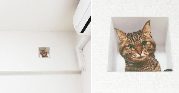 สาวเกือบโดนไล่ออกจากอพาร์ทเม้นท์ เพราะถูกเข้าใจผิดว่าแอบเลี้ยงแมว