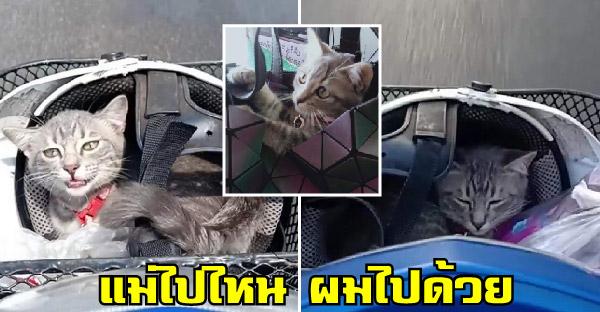 น้องแมวขึ้นมอไซค์ไปกับทาสทุกหนทุกแห่ง ไม่ว่าจะออกเที่ยวหรือไปทำงาน