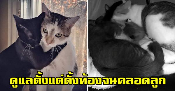 สองแมวในบ้านอุปถัมภ์มีความสัมพันธ์ลับๆก่อนจะทำหมัน และคุณพ่อก็ดูแลลูกน้อยที่เกิดมาราวมืออาชีพ