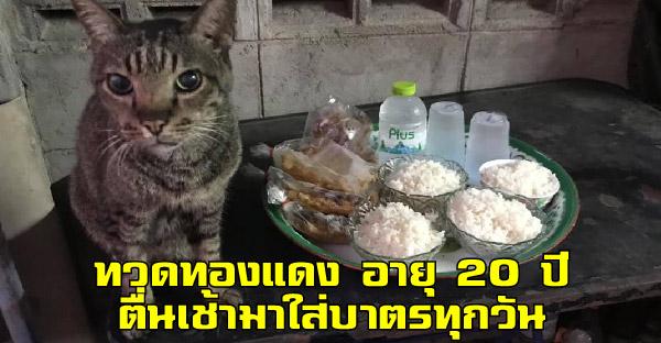 """""""ทองแดง"""" ทวดแมวสายบุญอายุ 20 ปี ใส่บาตรทุกเช้า ที่ช่วยบอกบุญต่อให้บรรดาทาสแมว"""
