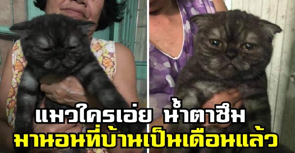 ชาวเนตโพสต์ถามหาแมวใครเอ่ย มากินมานอนที่บ้านเป็นเดือน ถ้าไม่เอาแม่จะเลี้ยงถาวรแล้วนะ