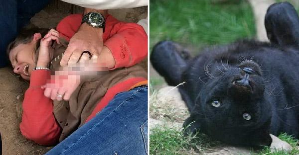สวนสัตว์ยืนยันเสือดำตะปบหญิงสาว เพราะเธอตั้งใจข้ามรั้วกั้นไปถ่ายเซลฟี่ด้วย