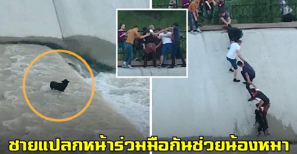 ชายแปลกหน้า 5 คน จับมือกันเพื่อช่วยเหลือสุนัข ที่ตกไปในทางระบายน้ำที่เชี่ยวกราด