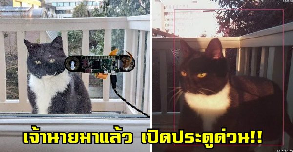วิศวกรสร้างเครื่องสแกนใบหน้าแมว เพราะกลัวว่ามันจะนั่งรอหน้าประตูนาน