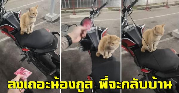 หนุ่มเจอแมวส้มยึดมอไซค์ หลอกล่อก็ไม่ยอมลง จะอุ้มลงก็กลัวเจอแจกยันต์ห้าแถว