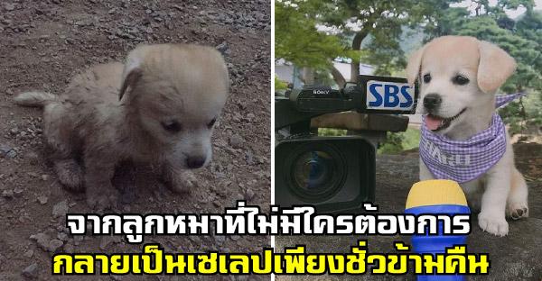 สาวช่วยลูกหมาตกคูน้ำ นั่งสิ้นหวังไม่มีใครต้องการ ก่อนจะโด่งดังเป็นพลุแตกในชั่วข้ามคืน