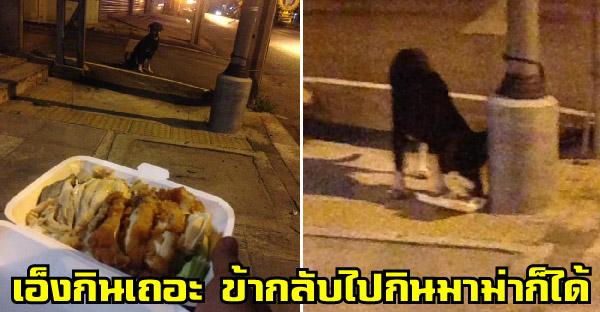 หนุ่มเจอหมาจรผอมหนังติดกระดูก จึงยกข้าวมันไก่พิเศษให้ ส่วนตัวเองกลับไปกินมาม่าแทนก็ได้