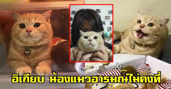 """รู้จัก """"อีเกียบ"""" น้องแมวอารมณ์ไม่คงที่ ความสามารถพิเศษเปิดตู้เย็นเองได้"""