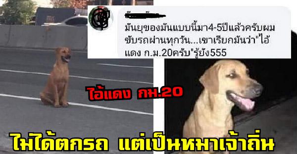 น้องหมานั่งข้างถนนไม่ยอมไปไหน ชาวเนตคิดว่าตกรถ แต่จริงๆเป็นหมาเจ้าถิ่นมานั่งตรงนี้ทุกวัน