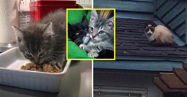 แมวสองพี่น้องเกือบไม่รอดจากข้างถนน สุดท้ายได้มาเจอกันอีกครั้งที่บ้านอุปถัมภ์