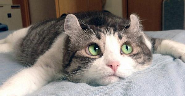 งานวิจัยชี้แมวรู้ชื่อของตัวเอง แต่เลือกที่จะเพิกเฉยมากกว่า
