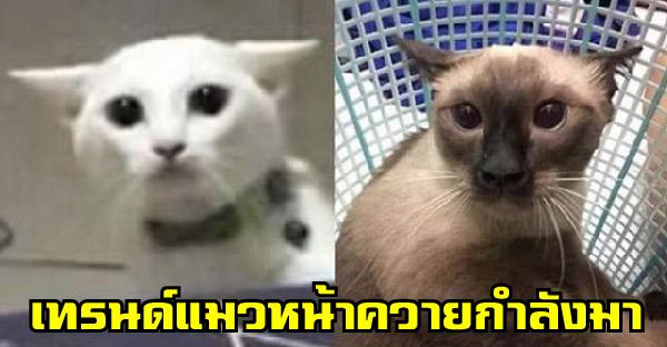 เมื่อกระแสแมวหน้าควายมาแรง บรรดาทาสจึงรวมพลังแชร์ภาพแมวที่เหมือนควายไม่น้อยหน้าเคิร์ท