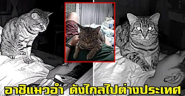 น้องอาชิแมวอำขวัญใจคนรักแมว ล่าสุดดังไกลไปต่างประเทศแล้ว