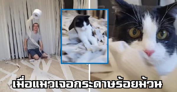 หนุ่มเนรมิตห้องด้วยกระดาษชำระ 100 ม้วน ให้แมวเล่นสนุกแบบไม่เคยเจอที่ไหนมาก่อน