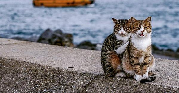 นักท่องเที่ยวเจอแมวข้างถนนกอดกันน่ารักสุดๆ ยืนยันในอิสตันบูลมีให้เห็นเพียบ