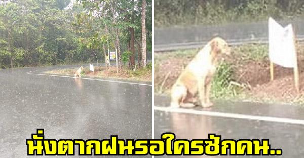 หมาจรจัดนั่งตากฝนรอใครซักคนผ่านมา กับเรื่องราวที่จะทำให้คุณน้ำตาซึม