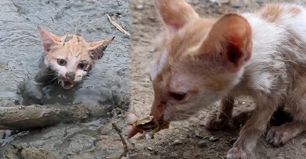 ชายหนุ่มช่วยชีวิตลูกแมวที่กำลังจมบ่อโคลน พร้อมให้อาหารและพากลับบ้านไปเลี้ยง